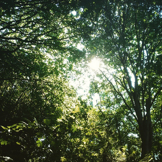 Summer sunshine peeks through a Whidbey tree canopy