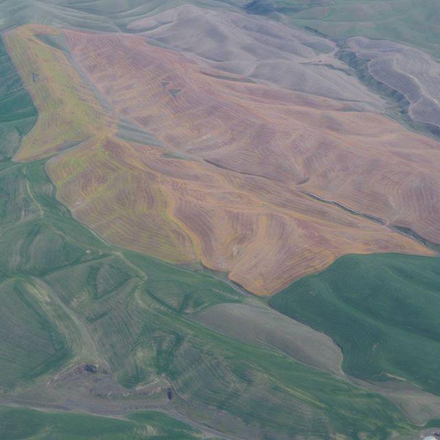 Aerial view of rolling Palouse hills near Walla Walla