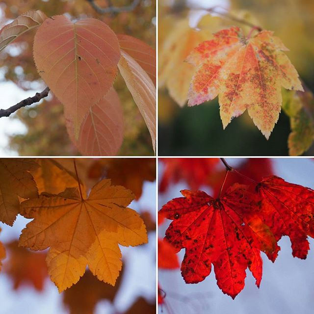 Tis the time of year for vibrant autumn colors... but they won't last!