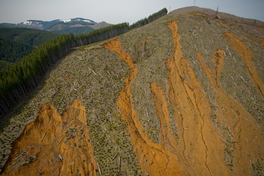Destroyed Lewis County hillside