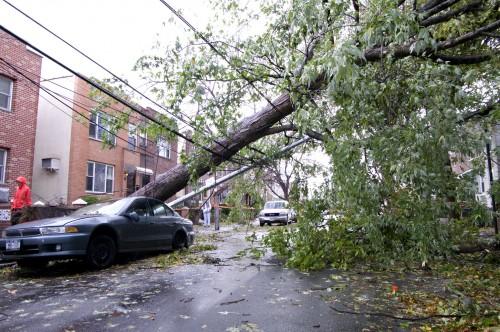 A fallen tree in New York's Astoria neighborhood