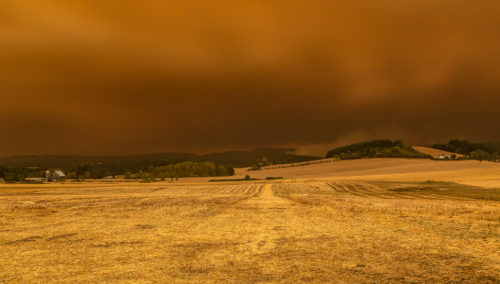 Chehalem Mountain Fire